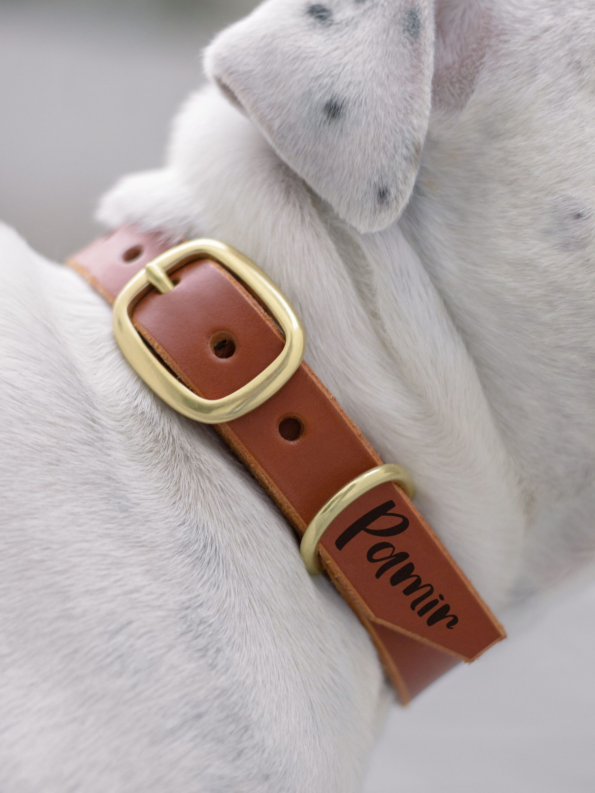 DOG COLLAR BRASS BUCKLE