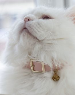 ROSE CAT COLLAR