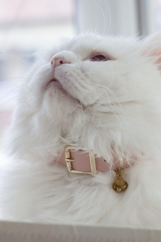 ROSE CAT COLLAR
