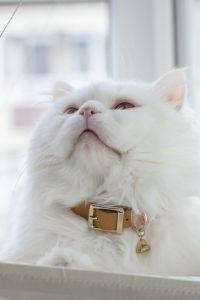 ALMOND CAT COLLAR