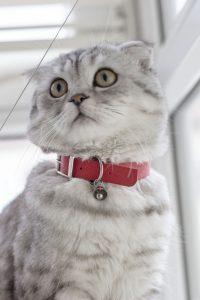 ROUGE CAT COLLAR