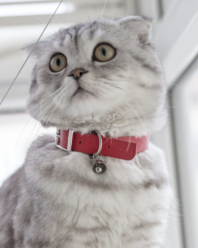 ROUGE CAT COLLAR