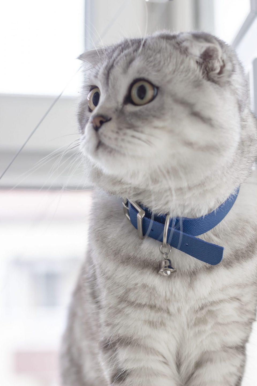 BLUE CAT COLLAR